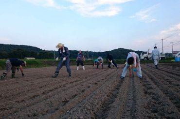 大豆プロジェクト 種まき