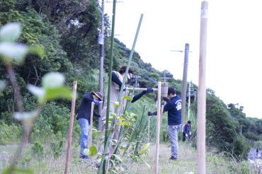 地島 椿苗遮光ネット張り作業